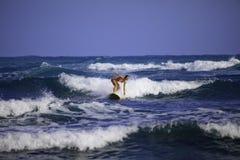 Muchacha en el bikiní rosado que practica surf Imágenes de archivo libres de regalías