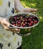 Muchacha en el delantal que sostiene un colador con la cereza dulce madura en el jardín imagenes de archivo