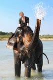 Muchacha en elefante Imagenes de archivo
