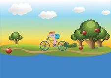Muchacha en la bicicleta Imagen de archivo