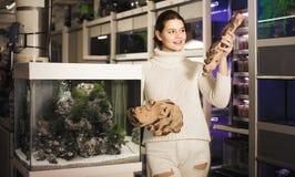 Muchacha en la tienda del acuario que elige la madera pétrea marrón para el acuario d Foto de archivo libre de regalías