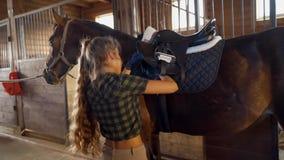 Muchacha en los sistemas estables la silla de montar en el caballo la muchacha abotona su cincha metrajes