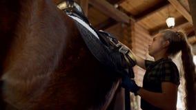 Muchacha en los sistemas estables la silla de montar en el caballo la muchacha abotona su cincha almacen de video
