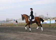 Muchacha en un caballo Imagen de archivo libre de regalías