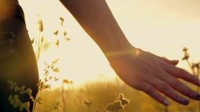 Muchacha en un campo de flor en la puesta del sol almacen de video