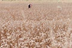 Muchacha en un ingenio del campo de trigo un sombrero Fotos de archivo