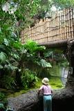 Muchacha en una selva tropical Fotos de archivo