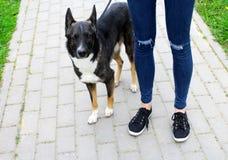 Muchacha en vaqueros rasgados con el perro Imágenes de archivo libres de regalías