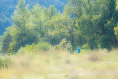 Muchacha en vestido azul en bosque que entra Fotos de archivo