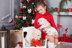 Muchacha feliz con dos golden retriever de los perritos en un fondo del árbol de navidad Imágenes de archivo libres de regalías