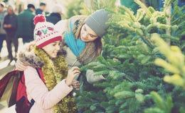 Muchacha feliz con la mamá que elige el árbol del ` s del Año Nuevo Imagen de archivo