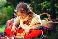 Muchacha feliz del niño que cosecha manzanas en jardín del otoño Activitty rural al aire libre estacional Imágenes de archivo libres de regalías