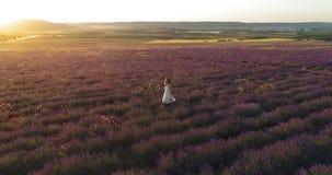 Muchacha feliz que camina en campo de la lavanda en la puesta del sol Lanzamiento aéreo almacen de video