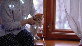 Muchacha, gatito y la Navidad almacen de metraje de vídeo