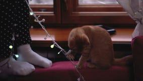 Muchacha, gatito y la Navidad