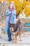 Muchacha hermosa con el mastín tibetano en la naturaleza Imagenes de archivo
