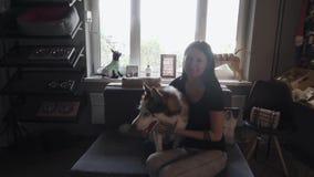 Muchacha hermosa con el perro esquimal en el sofá almacen de metraje de vídeo