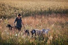 Muchacha hermosa con sus animales domésticos en el campo del centeno Foto de archivo