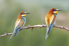 Muchacha hermosa del pájaro Foto de archivo