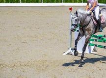 Muchacha hermosa en caballo gris en la demostración de salto, deportes ecuestres Imagen de archivo