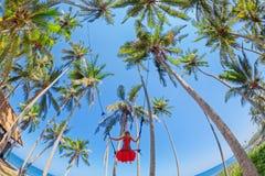 Muchacha hermosa en el oscilación de la cuerda entre las palmas de coco en la playa Fotos de archivo libres de regalías