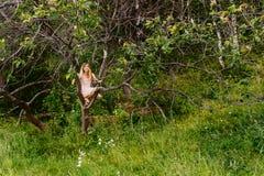 Muchacha hermosa en el vestido del verano que se sienta en árbol en verano imagenes de archivo