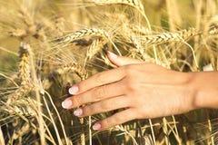 Muchacha hermosa joven en el campo con los oídos en la mano Fotos de archivo