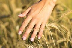 Muchacha hermosa joven en el campo con los oídos en la mano Imagen de archivo