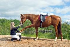 Muchacha hermosa y su caballo hermoso Foto de archivo libre de regalías