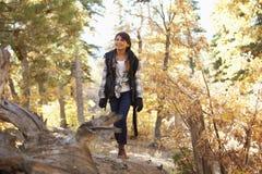 Muchacha hispánica que camina a lo largo de un árbol caido en un bosque Foto de archivo
