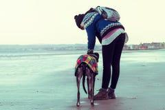 Muchacha irreconocible del inconformista que camina su perro, galgo, en la playa Fotos de archivo