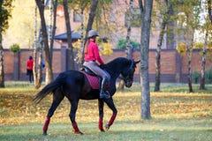 Muchacha joven del jinete en caballo de bahía en el parque Foto de archivo