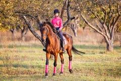 Muchacha joven del jinete en caballo de bahía en el parque Imagenes de archivo