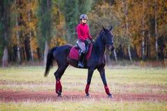 Muchacha joven del jinete en caballo de bahía en el parque del otoño Fotos de archivo