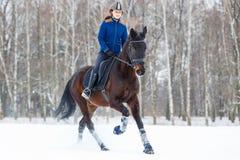 Muchacha joven del jinete en el caballo de bahía que galopa en invierno Imagen de archivo libre de regalías