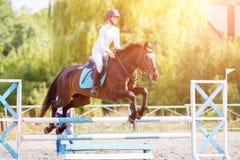 Muchacha joven del jinete en el caballo de bahía que salta sobre barrera Imágenes de archivo libres de regalías