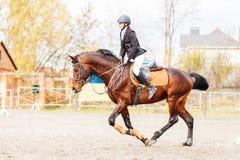 Muchacha joven del jinete en el caballo que trota en el salto de la demostración Imagen de archivo libre de regalías