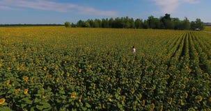 Muchacha linda con el pelo del coñac en los sundress blancos del verano que se colocan en centro del campo enorme con los girasol almacen de video