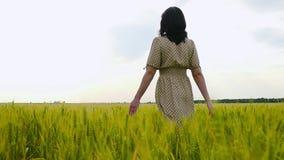Muchacha morena en un vestido que camina en el campo, tocando los oídos del trigo metrajes