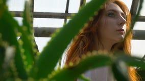 Muchacha pelirroja con una cara hermosa entre el áloe almacen de metraje de vídeo