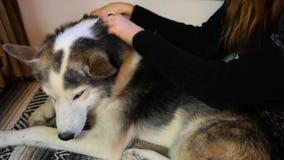 Muchacha que acaricia su perro en la sala de estar almacen de metraje de vídeo