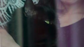 Muchacha que acaricia un gato afuera metrajes