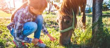 Muchacha que alimenta el caballo de Brown imagenes de archivo