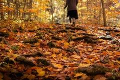 Muchacha que camina alrededor de la trayectoria de la raíz del árbol cubierta en hojas de la caída fotografía de archivo