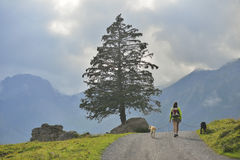 Muchacha que camina con sus perros cerca de Oeschinensee, Kandersteg Suiza Foto de archivo libre de regalías