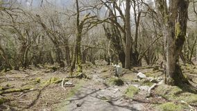 Muchacha que camina en bosque misterioso entre las montañas de Nepal almacen de metraje de vídeo
