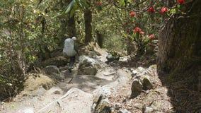 Muchacha que camina en bosque misterioso entre las montañas de Nepal almacen de video