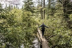 Muchacha que camina en el lago canada Ontario del paisaje salvaje natural de dos ríos cerca del agua en parque nacional del Algon imagen de archivo