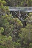 Muchacha que camina en los árboles forestales en paseo del top del árbol Imagen de archivo