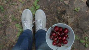 Muchacha que come las cerezas al aire libre Visión superior, POV, cierre para arriba almacen de video